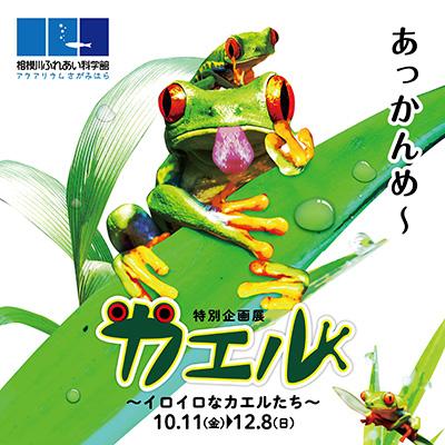 特別企画展「カエル ~イロイロなカエルたち~」